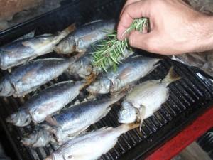 fresh-fish-klada-hrvatska